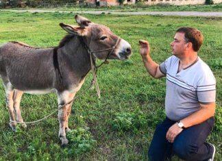 Латанский о животных картинка